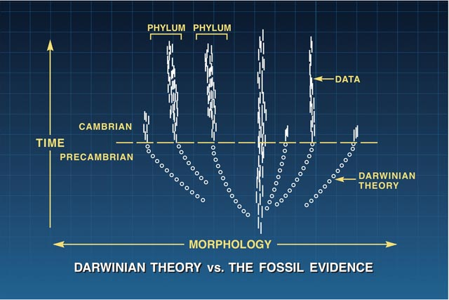 Darwinian theory vs. the fossil evidence