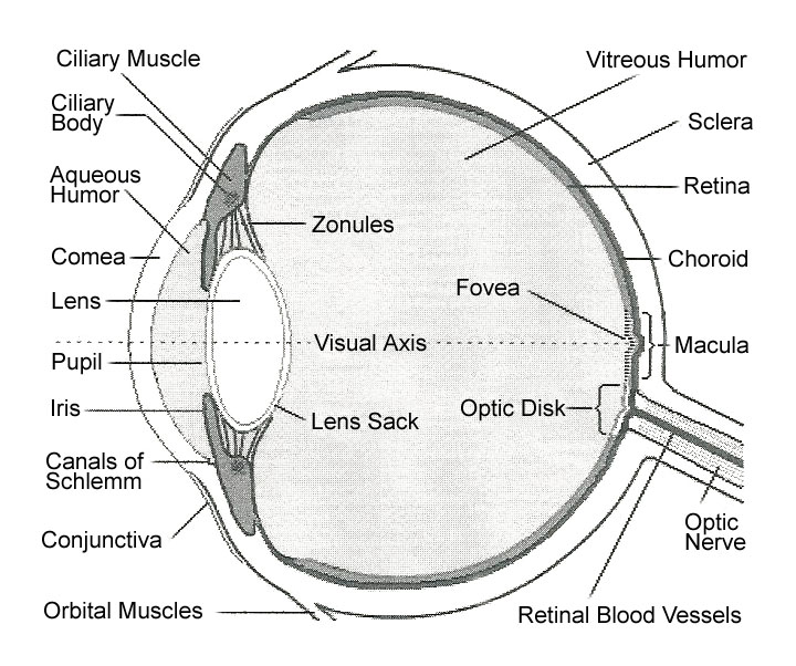 Exercise your wonder october 1 2004 there are many parts of the eye all of which play an important role in either directly accomplishing this function or acting in support see figures 1 2 ccuart Choice Image